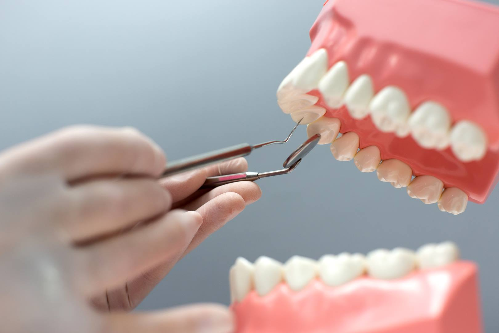 nurse practicing on the layout of the jaw with teeth